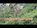 Pemakaman Paling Extrim di Toraja pada dinding tebing curam