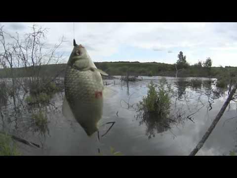 рыбалка бери  карася во  абакане