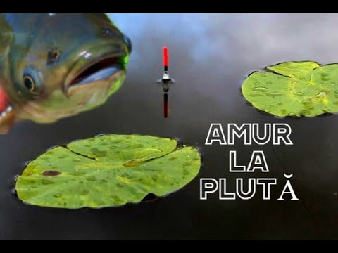 Download Pescuit la PLUTA cu Porumb Senzatii tari la AMUR CTENO TEN