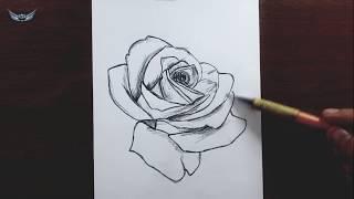 Gül Çiçegi Nasıl Çizilir   Çiçek Çizimleri