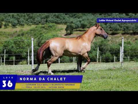 LOTE 36 - Norma da Chalet