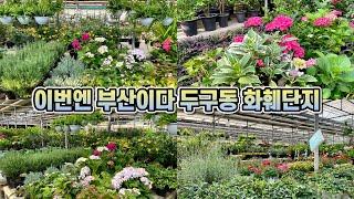 부산 두구동 화훼단지 꽃구경 다녀왔어요!! 랜선식물쇼핑…