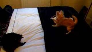 Mia and Jazz and Rio Bed fight! Thumbnail