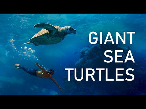 BEST FREE DIVING PHILIPPINES APO REEF (World's Second Largest Contiguous Reef)