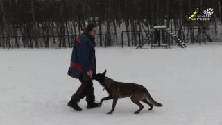 Упражнения для команды лежать, три варианта кормления,поощрения,подкрепления собаки