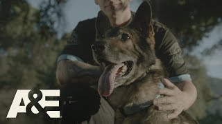 Police Dog Handlers Share Emotional K9 Stories Part 2 | America's Top Dog (Season 1) | A&E