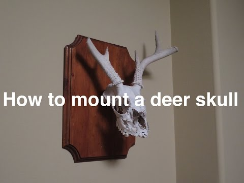 How to mount a deer skull