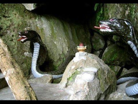Chuyện Lạ việt nam - Chuyện rùng mình về rắn thần báo oán ở Thái Nguyên