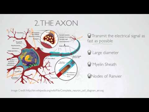 what is the axon