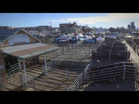 I Am Angus: Dan Green and the history of the Denver Union Stockyards