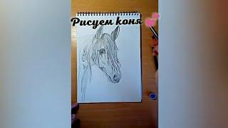 ~•🌸Как нарисовать лошадь?/Коня?/Карандашный рисунок🌸•~