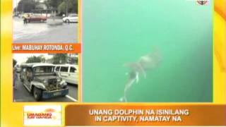 First dolphin born in captivity in PH dies