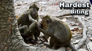 TRULY HEARTBREAKING TO SEE THIS VIDEO, REAL D D  BECOME EVIL MONKEY AGAIN HURTING OTHER BABY MONKEY