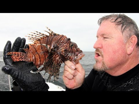 2019Feb28 LionFish Hunting Off Pensacola On The Southern Spear-It