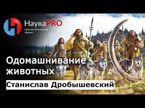 Станислав Дробышевский - Одомашнивание животных