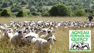 L' agneau fermier du quercy  : un label sur des terres nourricières