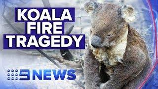 Australia's bushfires taking a toll on wildlife | Nine News Australia