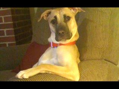 Funny Dogs Acting Like Humans Compilation 2015