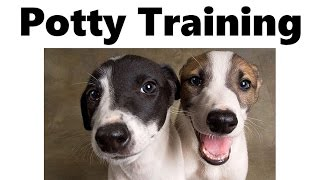 How To Potty Train A Greyhound Puppy - Greyhound House Training Tips - Greyhound Puppies