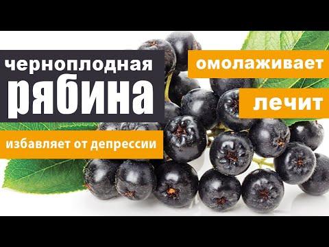 Рябина черноплодная (арония): омолаживает, лечит, избавляет от депрессии