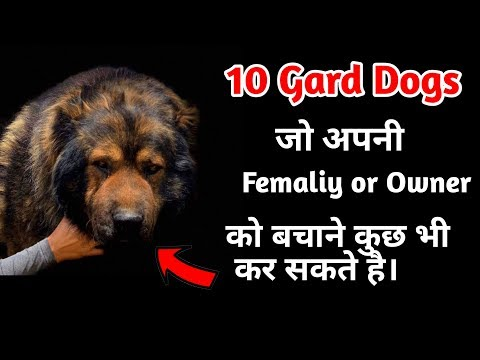 10 Guard Dogs protective your family / in Hindi / 10 गार्ड डॉग जिनसे बचके रहे