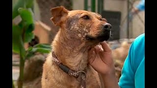 Enfermedades de piel en las mascotas: ¿cómo identificarlas y qué hacer? | Noticias Caracol