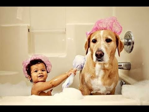 Best Friend Dog And Baby Take A Bath Funny Time Together –  Cute Dogs and Babies Compilation 2017