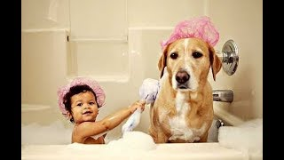 Best Friend Dog And Baby Take A Bath Funny Time Together -  Cute Dogs and Babies Compilation 2017