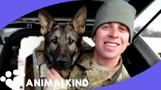 Army dog races into arms of soldier after 3 years apart