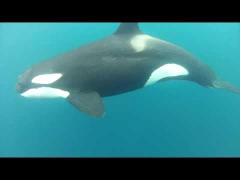 Cocos Island Dive Highlights - September 2-12 2012