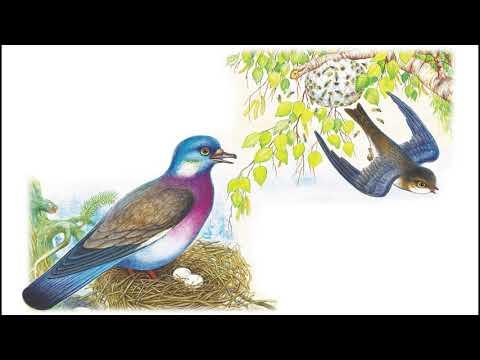 Смотреть мультфильм бианки лесные домишки