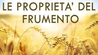 Proprietà del Frumento - Tutto quello che c'è da sapere sul Grano