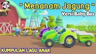 Menanam jagung lagu anak indonesia | Kartun baby bus | Menanam jagung di kebun kita
