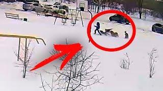 Стая собак напала на ребенка Видео