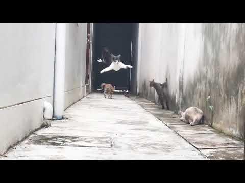 ninja cat escapes like a boss