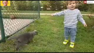 Funny Cats Annoying Babies and Babies Annoying Cats( PART01) -  Youtube