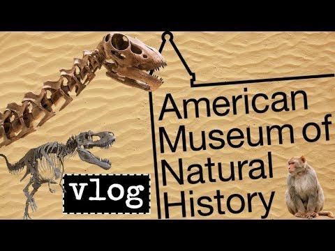 Vlog: American Museum of Natural History