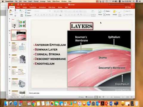 Anatomy Of The Cornea Microscopic Youtube