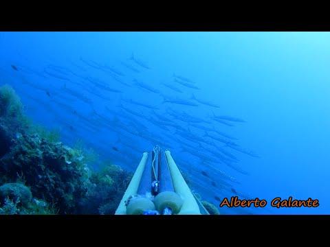 PESCA SUBACQUEA: TRIS DI BARRACUDA BY Alberto Galante