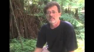 Terence Mckenna - Novelty Theory explained in seven minutes