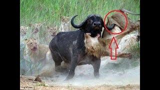 Wonderful Animals - king of the desert, Desert survival ?