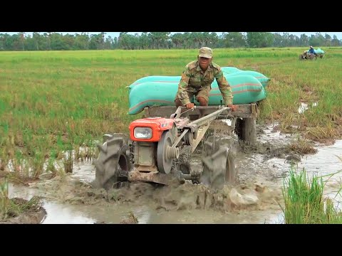Best machines transport rice throw in deep water l Nice machines working seep in the muddy