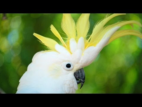 How to Take Care of a Cockatoo | Pet Bird