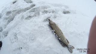 Ловля щуки на жерлицы зимой #2 (видео-отчет) Рыбалка 10 января 2015 Зима -Неглухозимье).