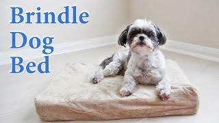 Brindle Solid Memory Foam Orthopedic Dog Bed Review. Our Shih Tzu Loves It.