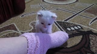 Котенок по кличке Снежок. Подкидыш наш. и котенок Мышка