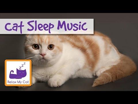 Cat Lullaby – Cat Sleep Music 🐱 #SLEEP01