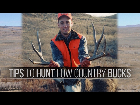 Tips For Hunting Mule Deer - Low Country Western Deer Hunting