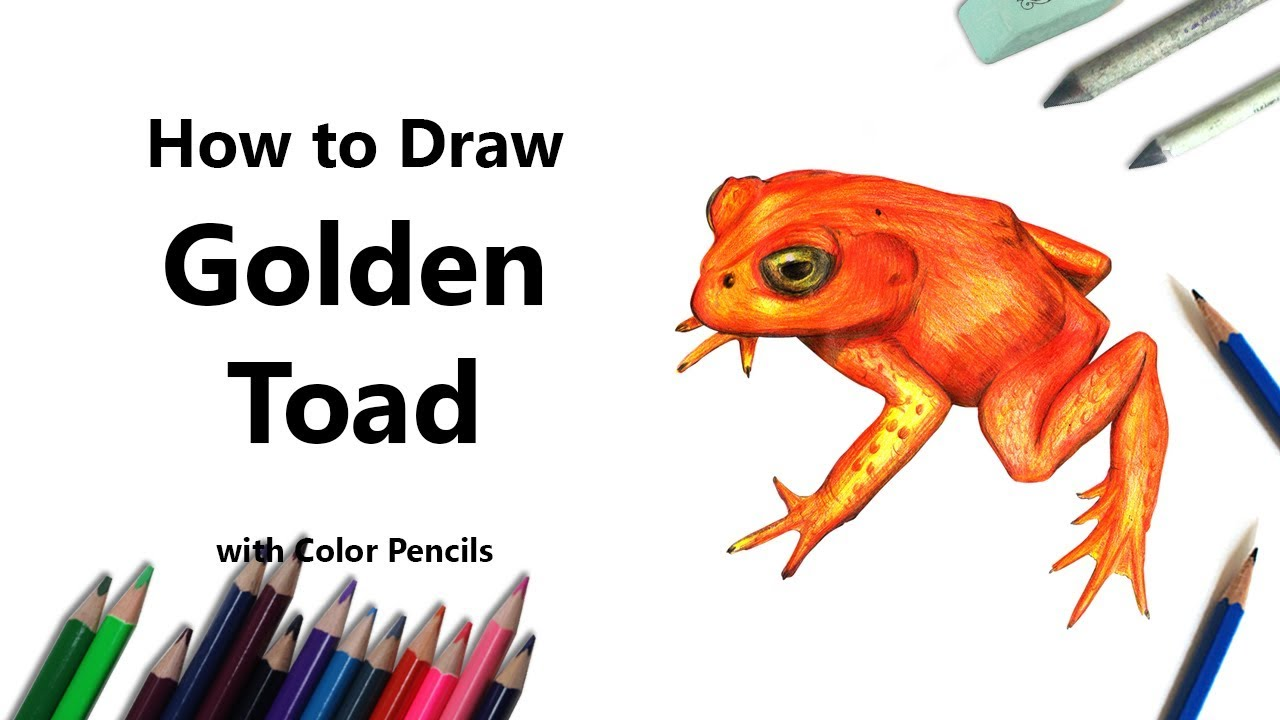 how to draw a golden toad with color pencils time lapse youtube