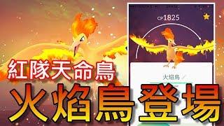 【精靈寶可夢go】pokemon go|天命鳥火焰鳥登場啦!大家開抓啦GOGO!!